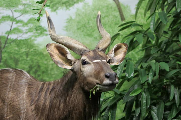 Tiere aus Afrika sind momentan in einer Sonderausstellung zu sehen