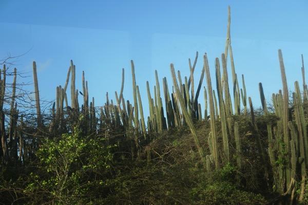 Cactus Forrest