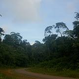 La route de Kaw (D6) près d'Amazone Nature Lodge, Montagne de Kaw (Guyane). 18 novembre 2011. Photo : J.-M. Gayman