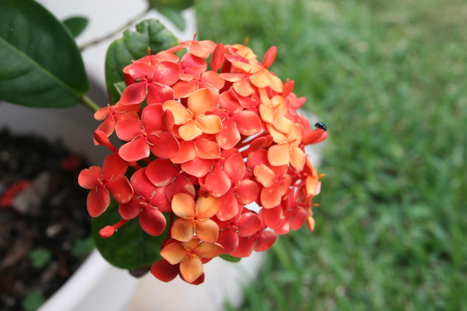 Gardening 2012 - IMG_3846.JPG