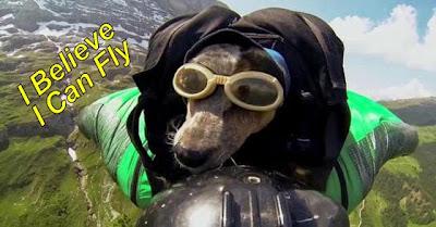 Quando Os Cães Voam. (É Por Coisas Como Esta Que O Cão É Considerado O Melhor Amigo Do Homem.)