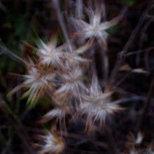 Photo: Impression: Wind and Weed