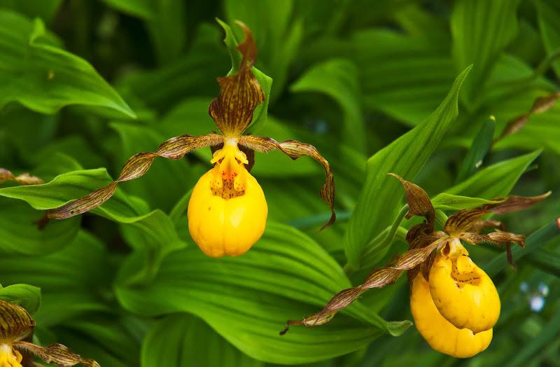 Flower_Garden-4398-Edit.jpg