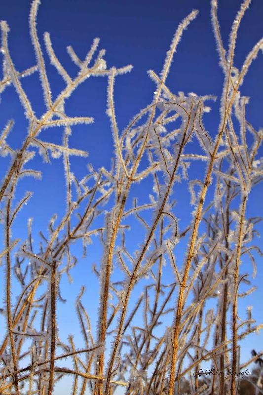 Winter - Winter-025.jpg