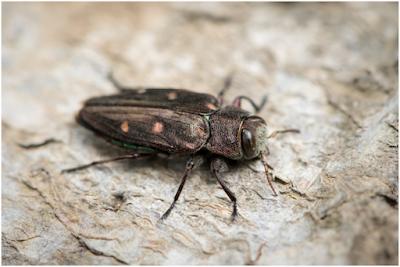 How to Get Rid of Wood Boring Beetles