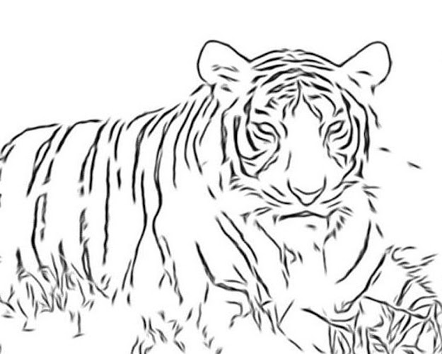 Nice Big Cat Coloring Pages Special Picture