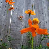 Gardening 2011 - 100_8677.JPG