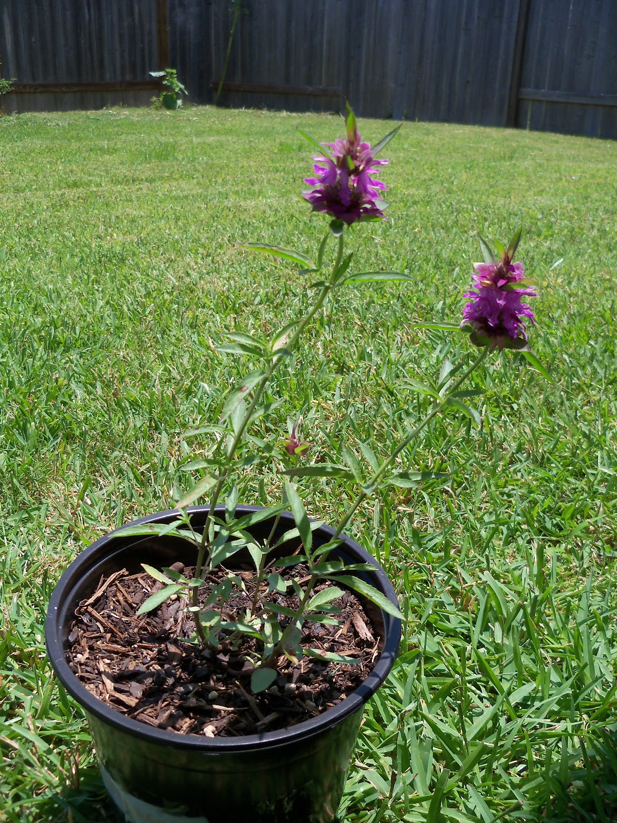 Gardening 2010, Part Three - 101_4898.JPG