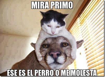 humor gatos (10)