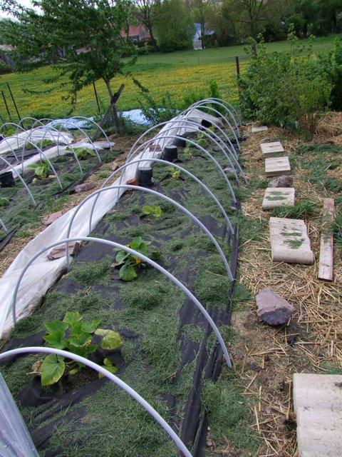 Les ch 39 tomates 2013 le suivi de vos semis 2013 archives - Quand mettre du fumier de cheval dans le jardin ...