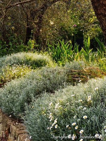 josie garden elicrisi