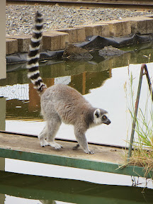 Other animal friends at the Wildlife Safari Village, like this lemur