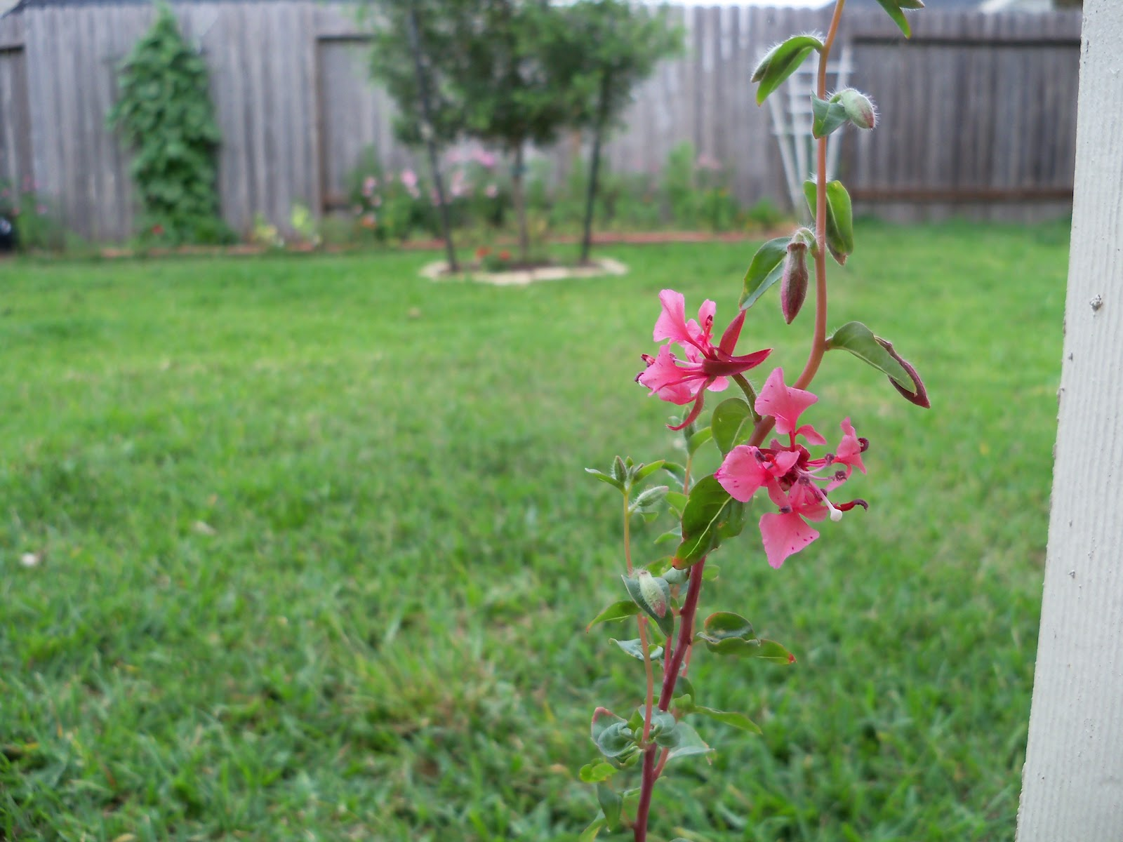Gardening 2010, Part Two - 101_2433.JPG
