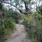 Near bottom of Morella Rd Track (261656)