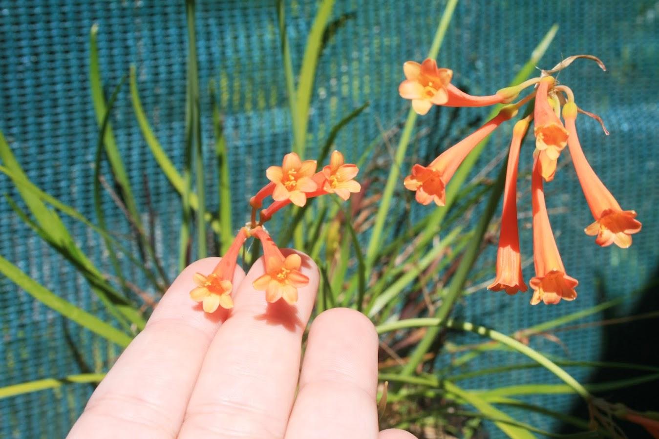 Mon Oranger Ne Fleurit Pas 28 Images Persil Et Oignon Pays Mai