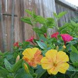 Gardening 2012 - IMG_2941.JPG