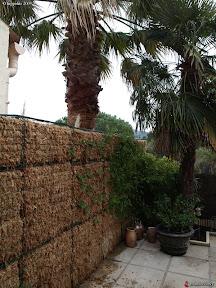 mur végétal réalisé par un particulier a Barcellone en espgne