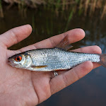 20150815_Fishing_Ostrivsk_120.jpg