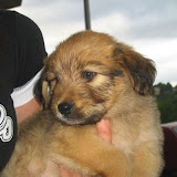 fotos caninas 029.jpg