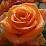 Manate C's profile photo