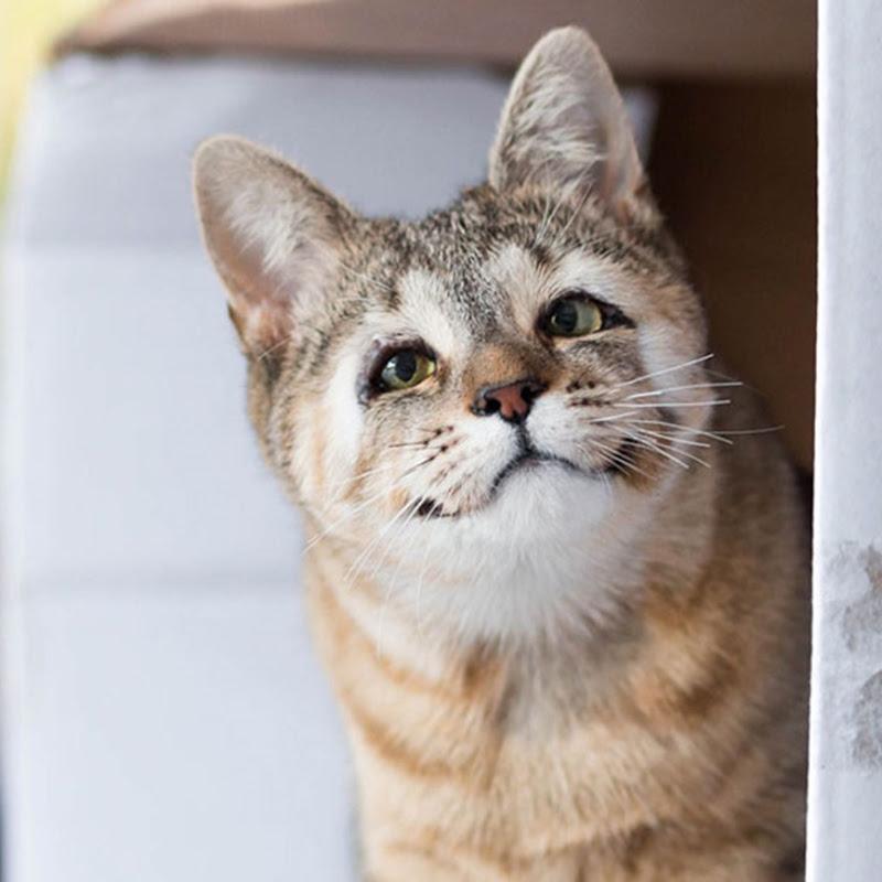 Felix Dan Dora Dua Ekor Kucing Terbiar Yang Lahir Tanpa Kelopak Mata Merayau-rayau Di Australia