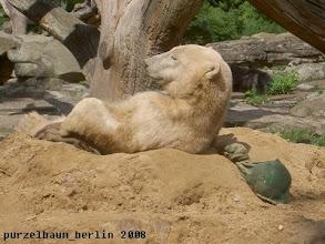 Photo: Eisbaerchen Knut liegt laessig auf dem Sandhaufen ;-)