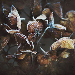 Life Hiding Inside Death by Amanda Halliday - Nature Up Close Flowers - 2011-2013 ( nature, art )