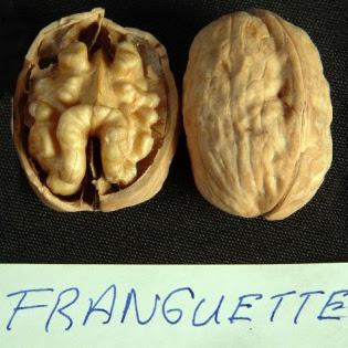 Франкет саженцы грецкого ореха