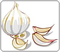 คำศัพท์ภาษาอังกฤษ_garlic_Vegetable