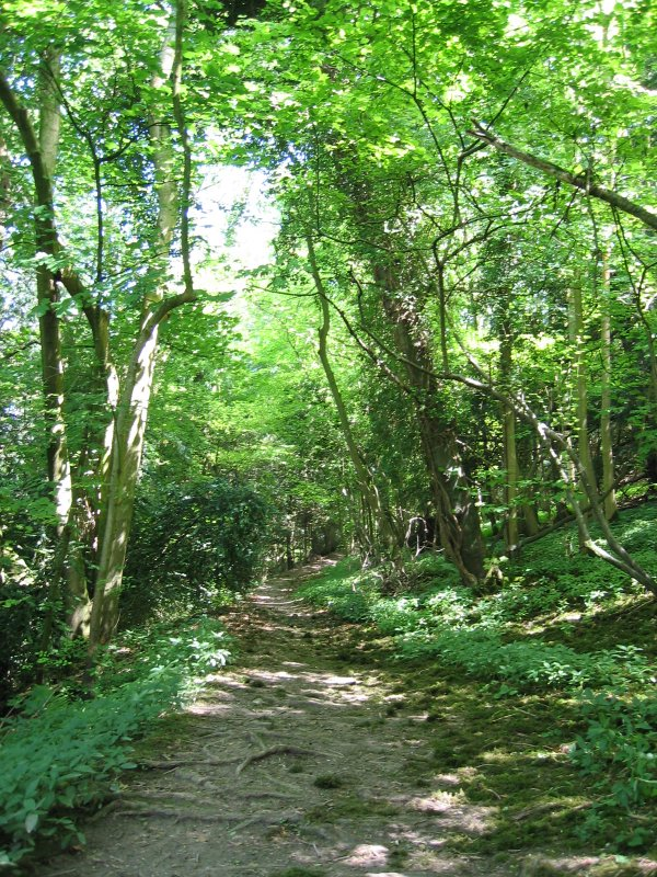 path in hte wood