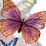 Gail Stern Kwak's profile photo