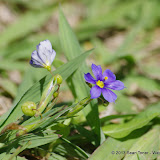 2013 Spring Flora & Fauna - IMGP6413.JPG
