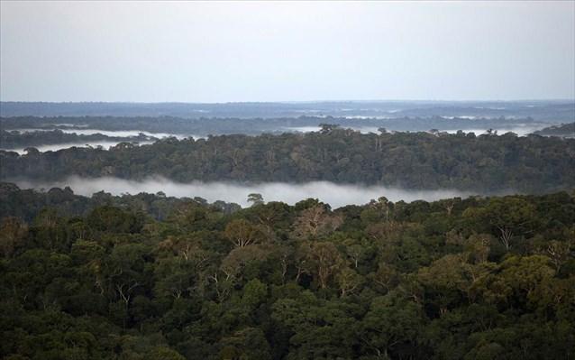 Έρευνα: Τα δύο τρίτα των τροπικών δασών έχουν καταστραφεί