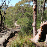 Footpath through the bush (217907)