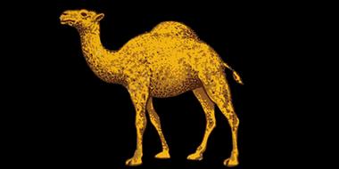 Camel_blk