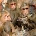 China tem primeiro registro de morte devido a vírus raro de macaco