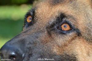 Campings que admiten perros