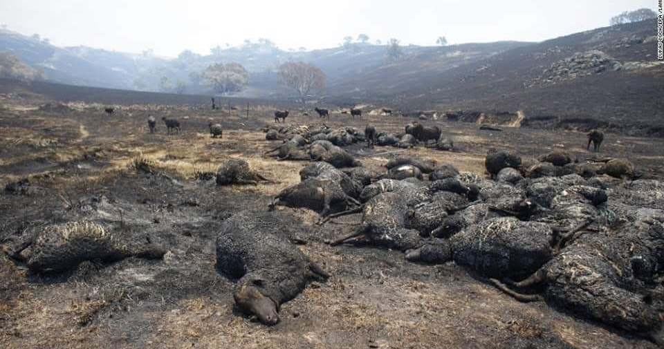 24 people dead 500 million animals dead 8,000 koalas dead Over 5.5 million hectares burned (the size of Belgium)