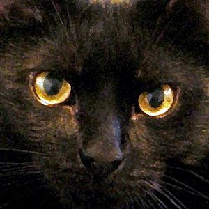 back cat copy1.jpg