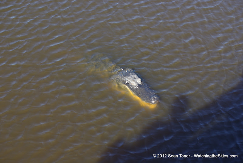 04-06-12 Myaka River State Park - IMGP4422.JPG