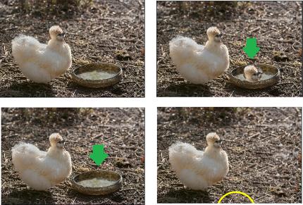 clone-tool-picmonkey-photo-editor