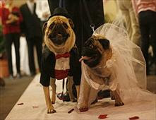 حفل زفاف فخم لكلب