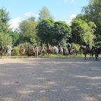 paarden4daagse Zorgvliet 2012 058.jpg