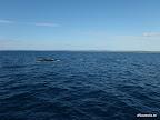 Waltreffen mit 6-7 Walen
