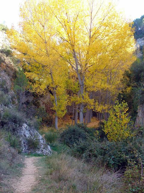 senderismo - Cañón del río Mira