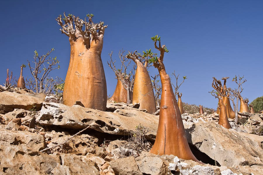 Justthetravel-Socotra-Island-in-Yemen-Great-setting