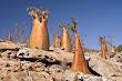 Justthetravel-Socotra-Island-in-Yemen-Great-setting