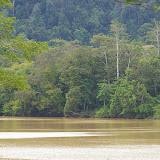 La Sengaï Kinabatangan à Sukau (Sabah, Malaisie, Bornéo), 6 août 2011. Photo : J.-M. Gayman