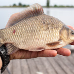 20160709_Fishing_Gorodyshche_012.jpg