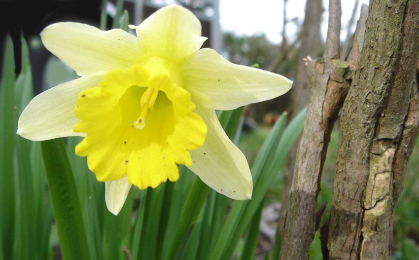 Fleur Qui Pousse Au Printemps Idee D Image De Fleur